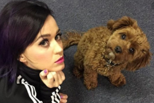 TOP  TEN CELEBRITIES WHO CAN'T HIDE THEIR LOVE FOR DOGS