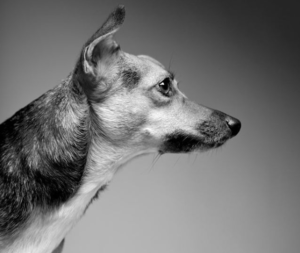 Simon's favorite dog breeds